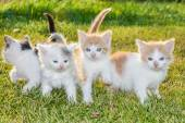 Kittens on the grass — Stock Photo