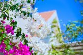 House flower bloom — Photo