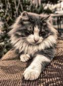 Gatti-cat-cats-animal — Stock Photo