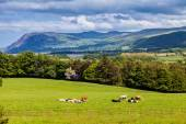 Scenic view of Welsh mountains and countryside — Stock Photo