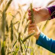 Child and woman holding a ripening ear of wheat — Stock Photo #53828381