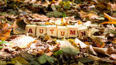 Autumn background and concept — Stock Photo