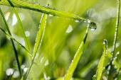 Blades of fresh green grass with dewdrops — Stock Photo