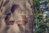 Recycling symbol on the trunk of a tree — Stock Photo