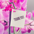Bouquet of orchids with a Thank You note — Stock Photo #54413059