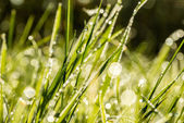 Background of fresh green grass with dewdrops — Stock Photo