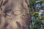 CO2 Carved into Tree Trunk — Stock Photo