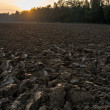 Newly ploughed field in spring time during sunset — Stock Photo #68959769
