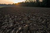 Newly ploughed field in spring time during sunset — Stock Photo