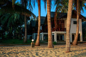 Palm trees and cottages — Stock Photo
