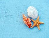 Molluscs — Stock Photo
