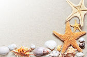 Starfish on the beach.Summer beach — Stock Photo