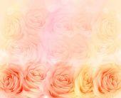 Hat sich Blumenhintergrund erhoben. — Stockfoto