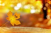 Golden autumn leaves — Stock Photo