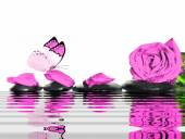 Butterfly, rose, petals and wet stones. Spa concept. — Stock Photo