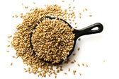 Grains of wheat — Stock Photo