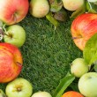 Fresh garden apples on green grass and space for text, top view — Stock fotografie #67300619