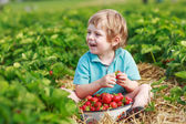 Happy little toddler boy on pick a berry farm picking strawberri — Stock Photo
