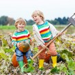 Two little kids boys sitting on big pumpkins on patch — Stock Photo #55578407
