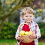 Preschool kid boy with fresh apples in home's garden, outdoors — Stock Photo #56402965