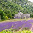 Abbey of Senanque and blooming rows lavender flowers — Stock Photo #56426423
