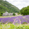 Abbey of Senanque and blooming rows lavender flowers — Stock Photo #56426503