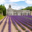 Abbey of Senanque and blooming rows lavender flowers — Stock Photo #56426549