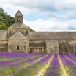 Abbey of Senanque and blooming rows lavender flowers — Stock Photo #56426635