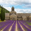 Abbey of Senanque and blooming rows lavender flowers — Stock Photo #56426647