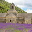 Abbey of Senanque and blooming rows lavender flowers — Stock Photo #56426751