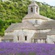 Abbey of Senanque and blooming rows lavender flowers — Stock Photo #56426853
