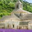 Abbey of Senanque and blooming rows lavender flowers — Stock Photo #56426855