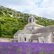 Abbey of Senanque and blooming rows lavender flowers — Stock Photo #56426905