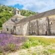 Abbey of Senanque and blooming rows lavender flowers — Stock Photo #56426923