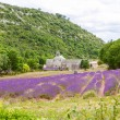 Abbey of Senanque and blooming rows lavender flowers — Stock Photo #56426993