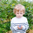Little boy picking blueberry on organic self pick farm — Stock Photo #60635419