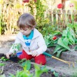 Adorable blond boy planting seeds and seedlings of tomatoes — Stock Photo #60636897