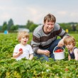 Father and two little boys on organic strawberry farm — Stock Photo #60640893