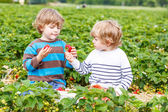 Two little friends having fun on strawberry farm in summer — Stock Photo
