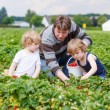 Father and two little boys on organic strawberry farm — Stock Photo #61784745