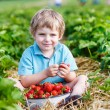 Happy little toddler boy on pick a berry farm picking strawberri — Stock Photo #62354913