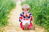 Cute little boy in glasses picking and eating strawberries on be — Stock Photo