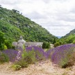 Abbey of Senanque and blooming rows lavender flowers — Stock Photo #64899267