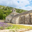 Abbey of Senanque and blooming rows lavender flowers — Stock Photo #64899303