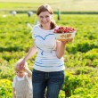 Mother and her little kid child on organic strawberry farm — Stock Photo #64900237