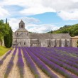 Abbey of Senanque and blooming rows lavender flowers — Stock Photo #66939331