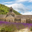 Abbey of Senanque and blooming rows lavender flowers — Stock Photo #68684859