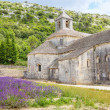 Abbey of Senanque and blooming rows lavender flowers — Stock Photo #68685411
