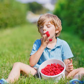 Little blond boy happy about his harvest on raspberry farm — Stock Photo