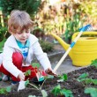 Adorable blond boy planting seeds and seedlings of tomatoes — Stock Photo #69549001